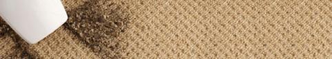 Habitation - Trucs et conseils - Tapis et carpettes : des pièges à poussière